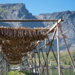 Stockfish at Reine